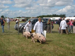Darcy & Tessie at Tockwith show