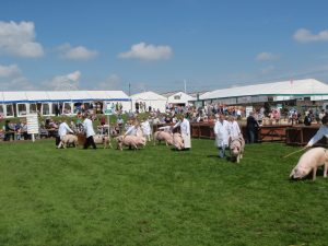 GOS on parade at the Great Yorkshire Show 2014